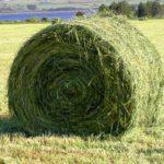 Аграрии Алтайского края ведут кормозаготовительную кампанию