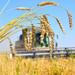 В 2019 году у производителей Алтайского края будет возможность экспортировать зерно по льготным железнодорожным тарифам