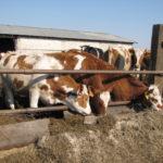 Сельхозпредприятия Алтайского края получили одну из самых больших сумм в стране