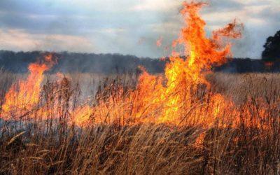 пожар_u24M462.jpg.1024x768_q60