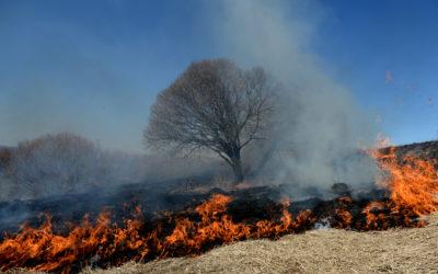 Сжигание сухой травы в Новгородской области
