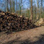 С 2022 года вводится запрет на вывоз необработанной древесины
